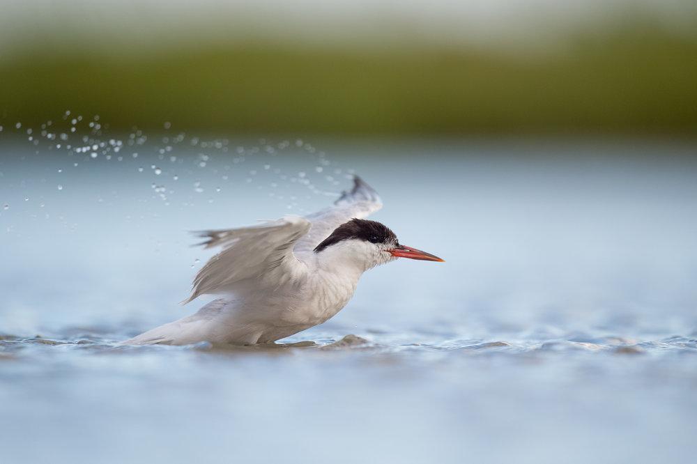 027_jersey_shorebirds.jpg