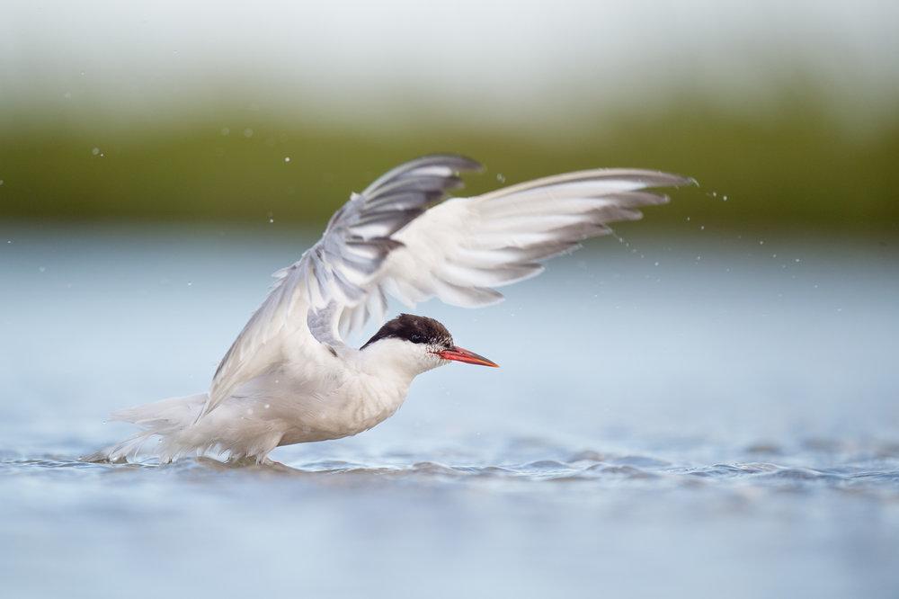 028_jersey_shorebirds.jpg