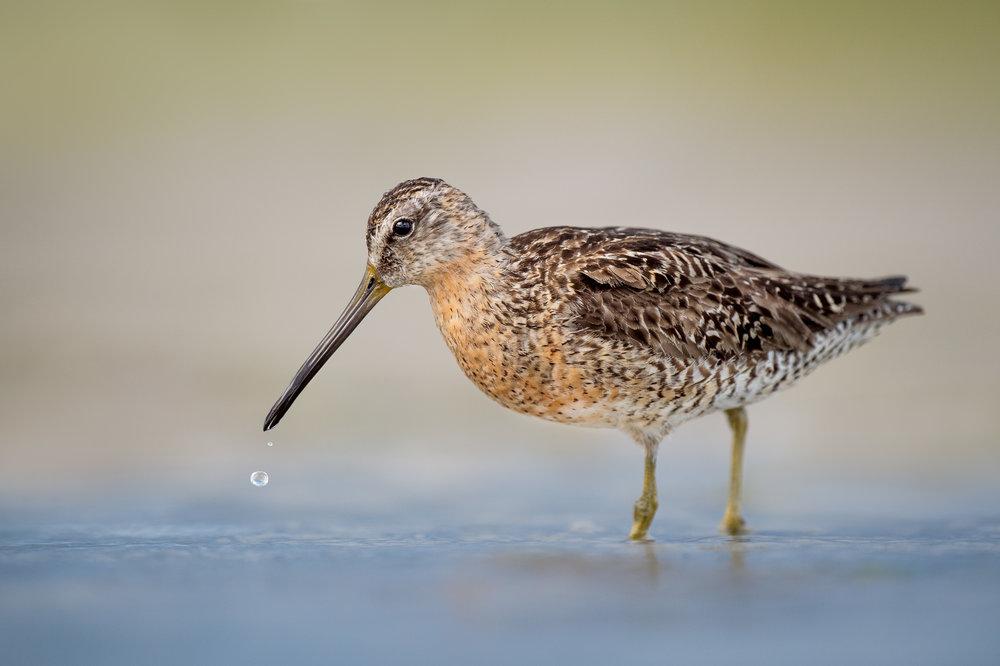 030_jersey_shorebirds.jpg