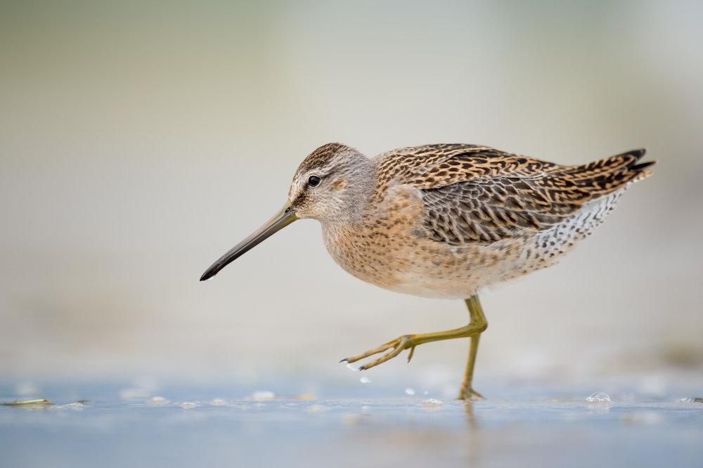 031_jersey_shorebirds.jpg