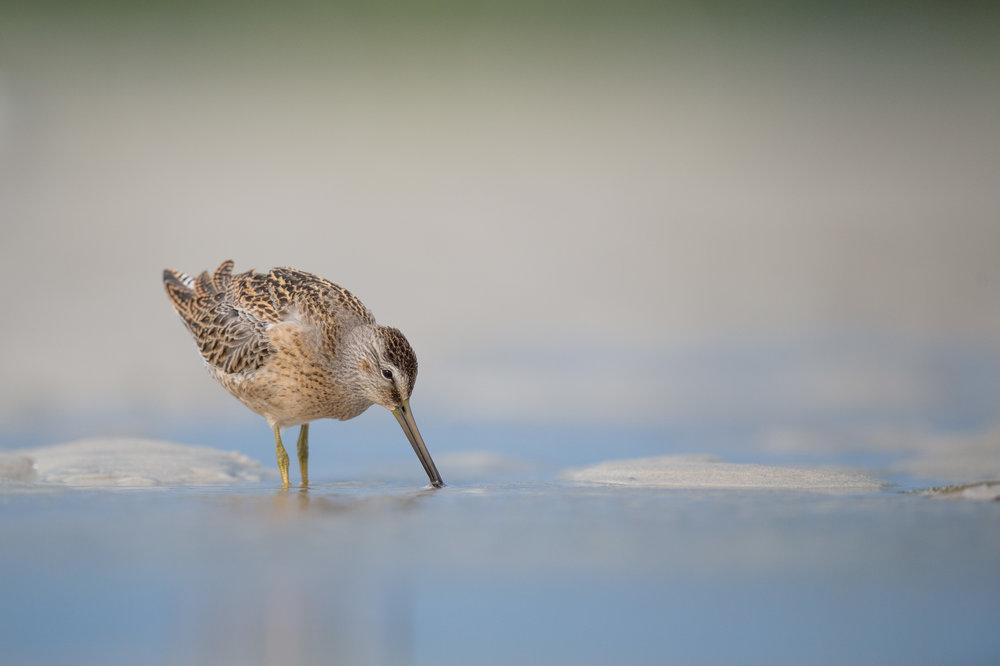 033_jersey_shorebirds.jpg