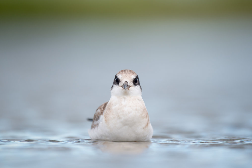 034_jersey_shorebirds.jpg