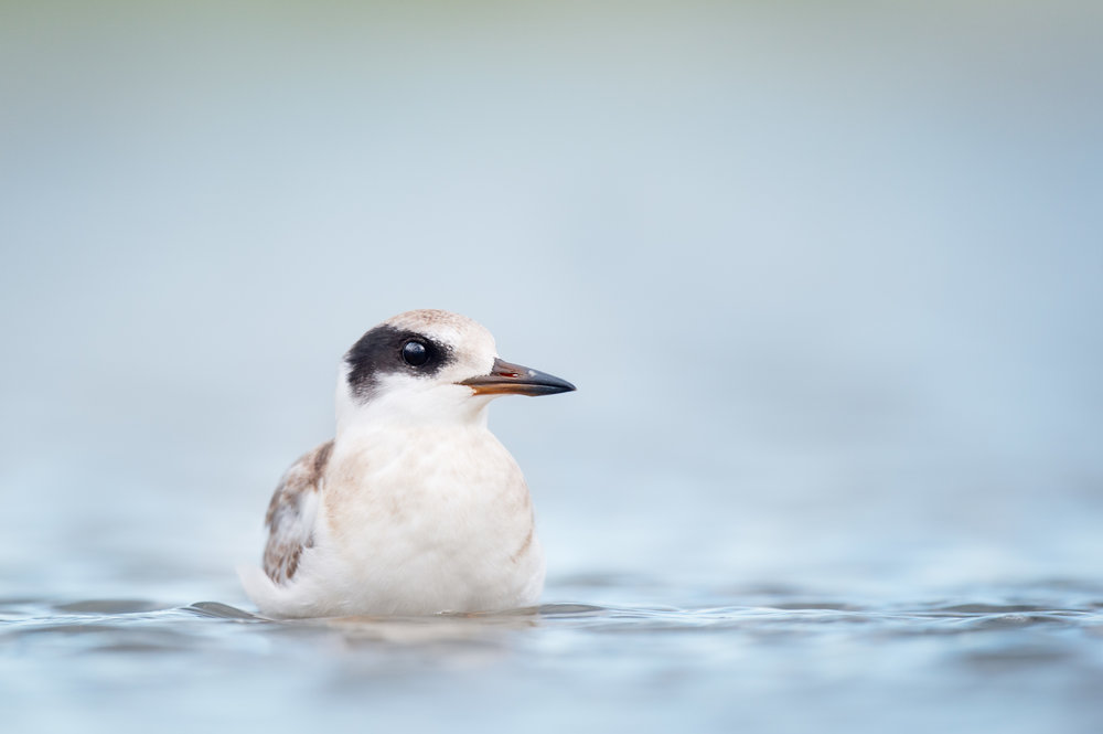035_jersey_shorebirds.jpg