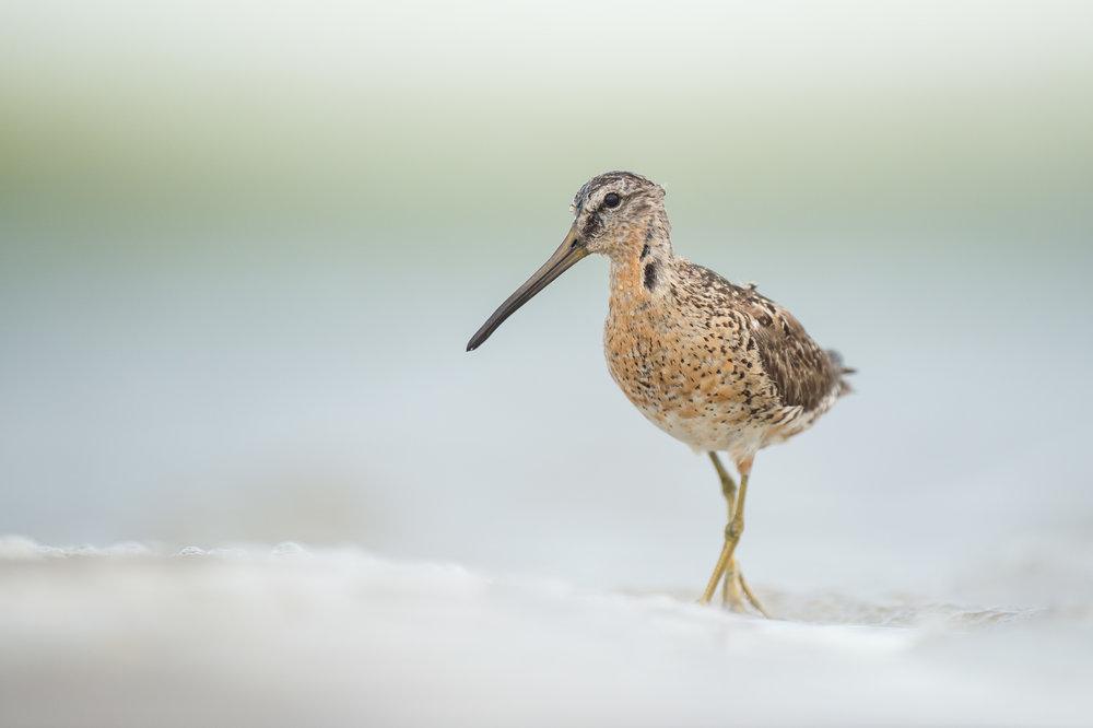 036_jersey_shorebirds.jpg