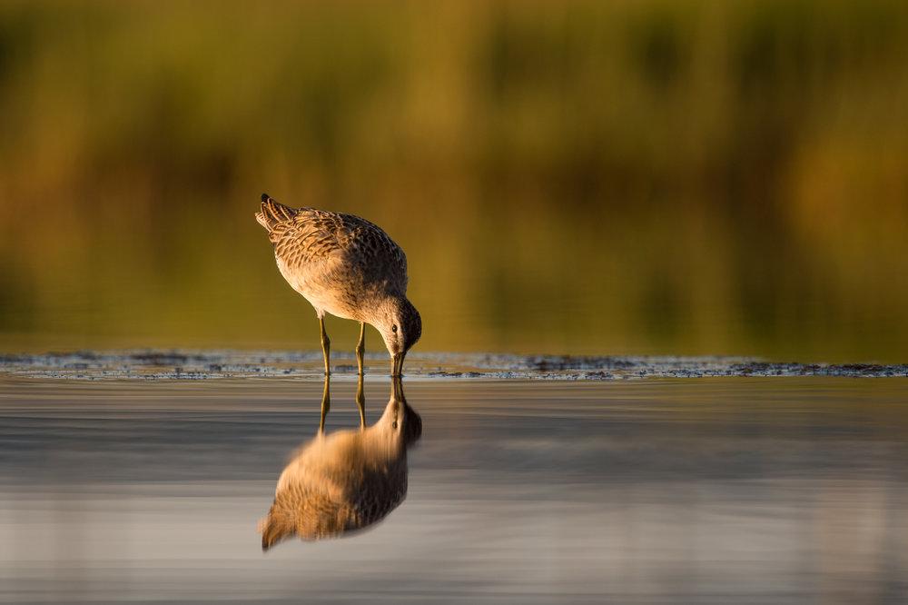 007_jersey_shorebirds.jpg