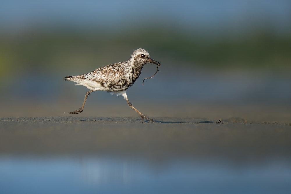 013_jersey_shorebirds.jpg