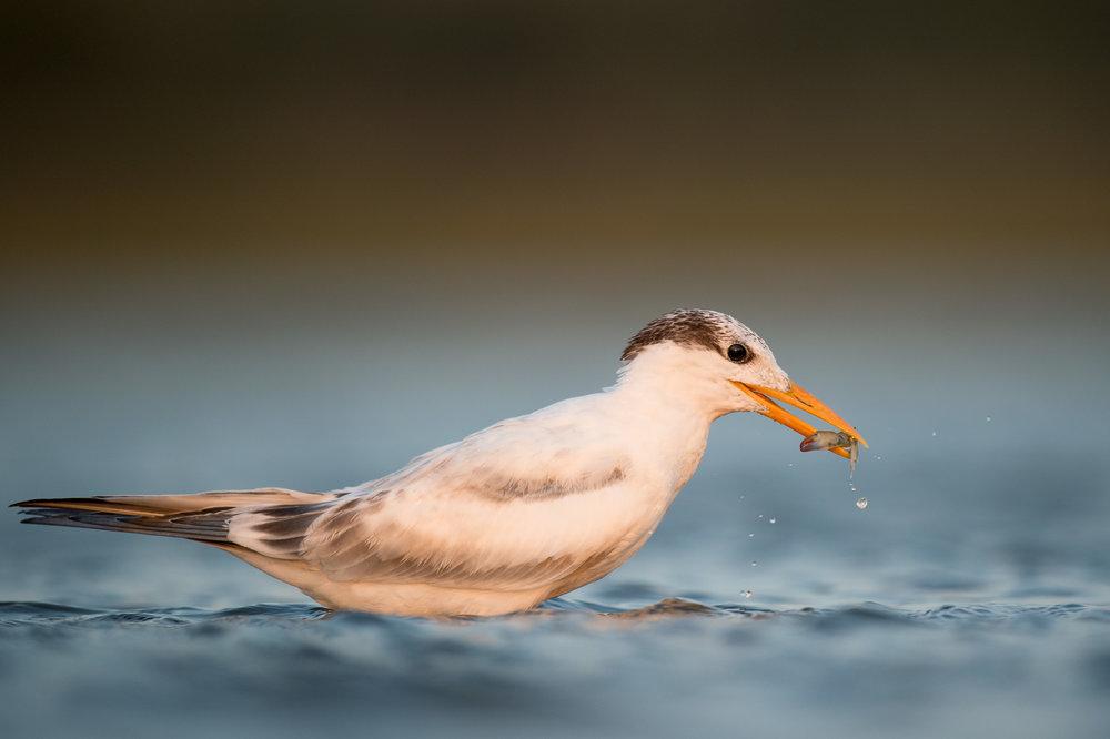 026_jersey_shorebirds.jpg