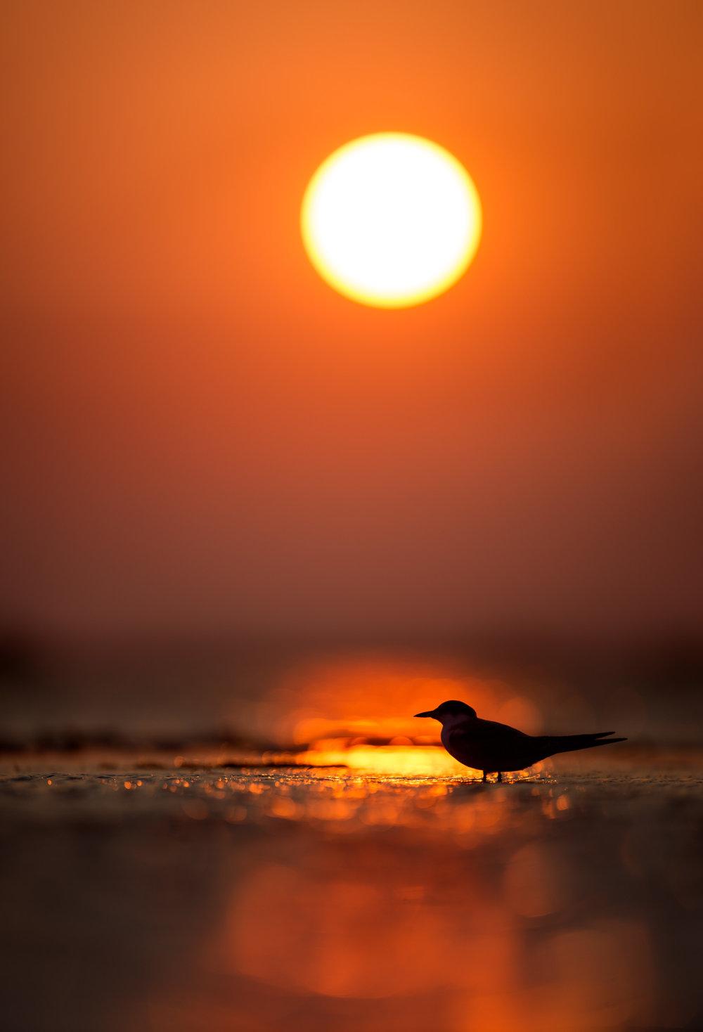 029_jersey_shorebirds.jpg