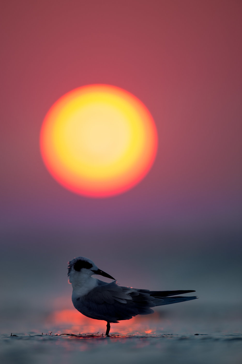 032_jersey_shorebirds.jpg