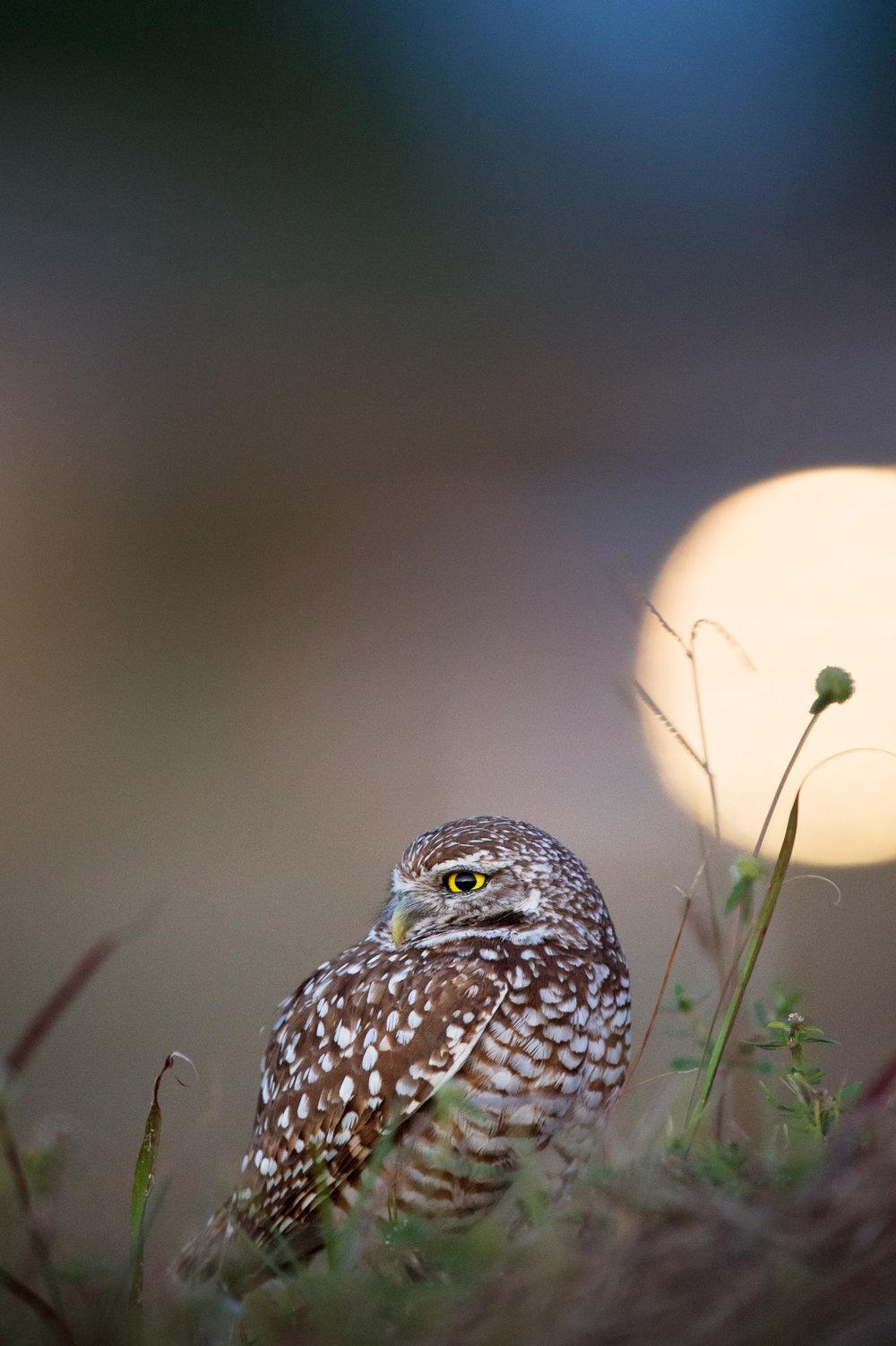 04_Night Owl.jpg
