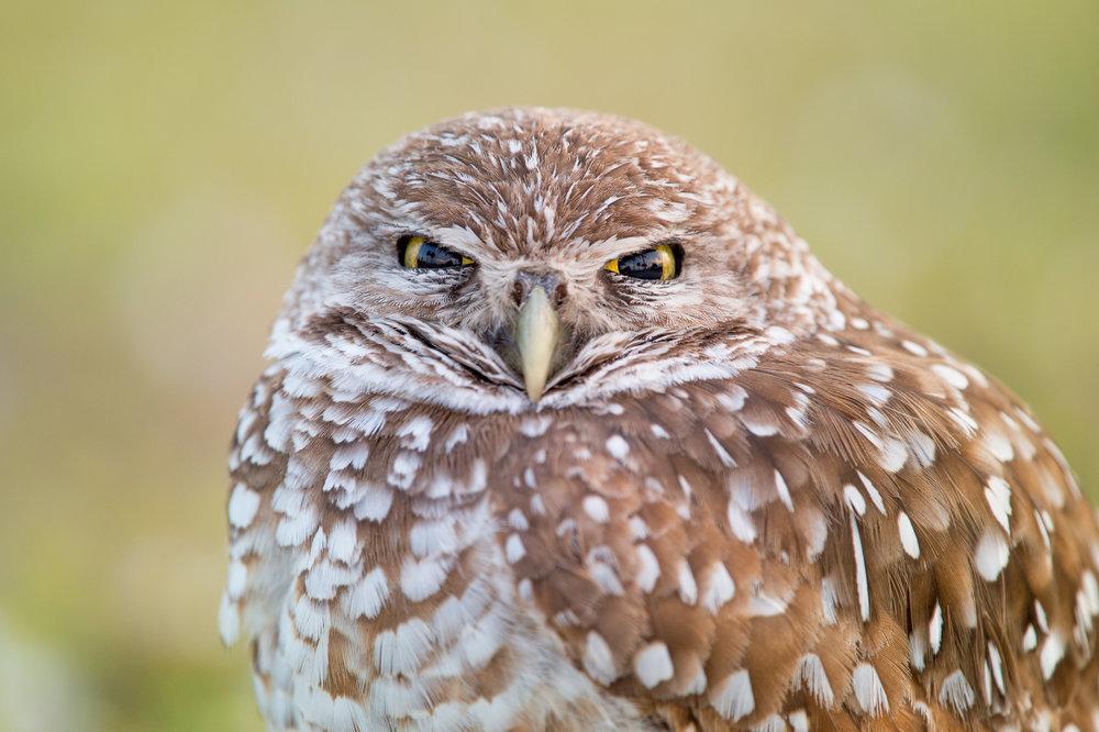 05_Owl Stare.jpg