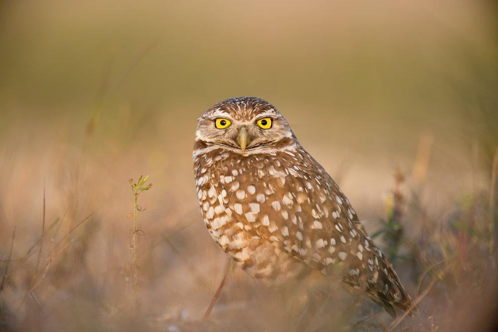 10_Evening Owl.jpg