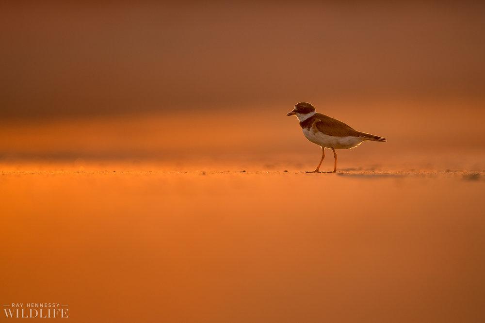 002_fall shorebirds.jpg