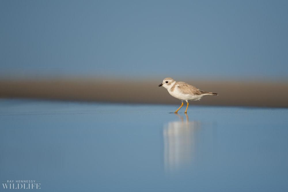 004_fall shorebirds.jpg