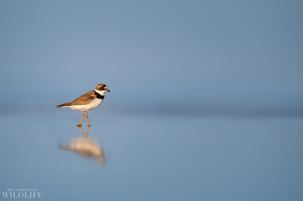 007_fall shorebirds.jpg