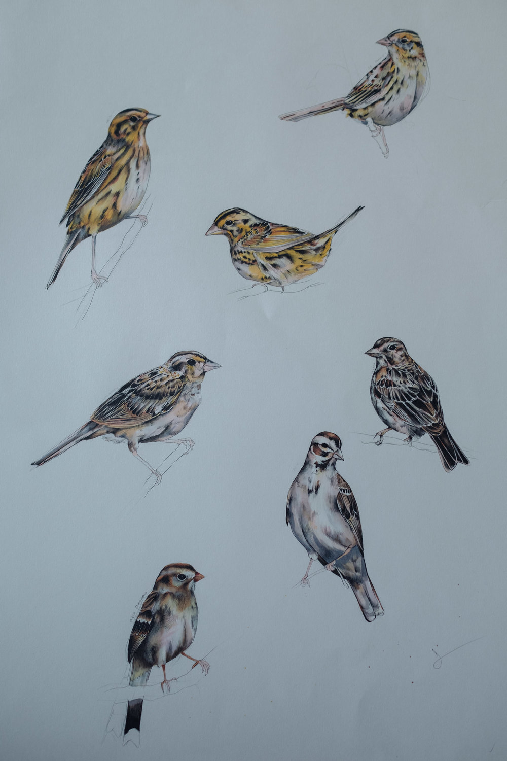 Seven Sparrows - detail