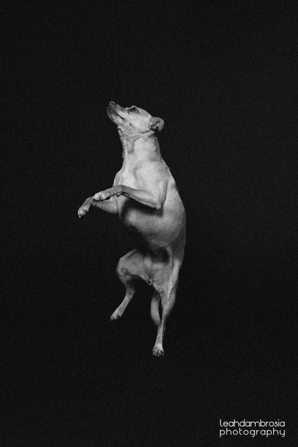 jumpingbean-6.jpg