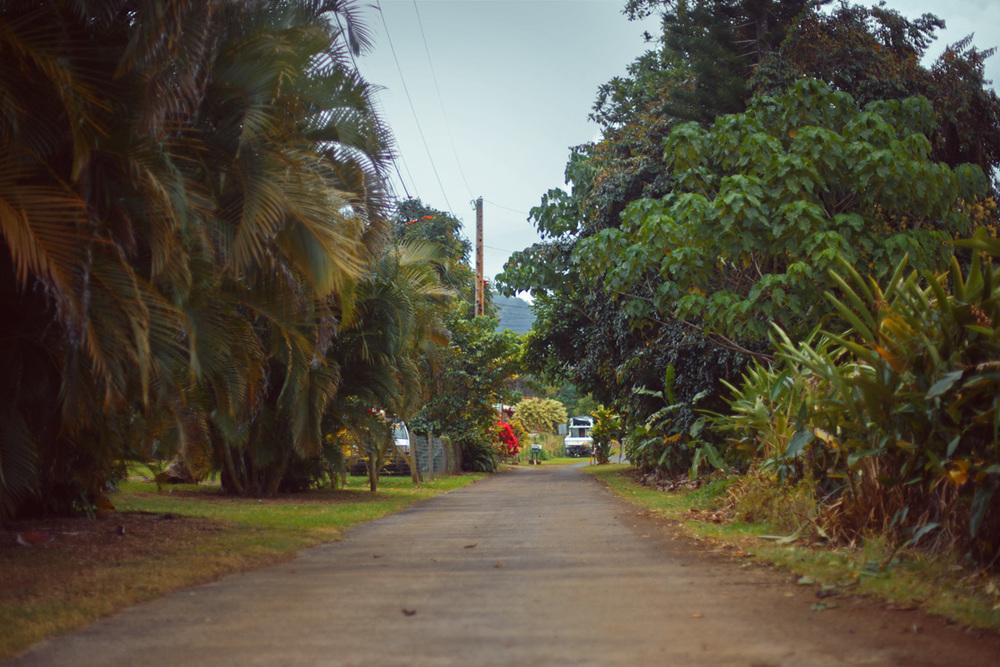 Hawaian-road.jpg