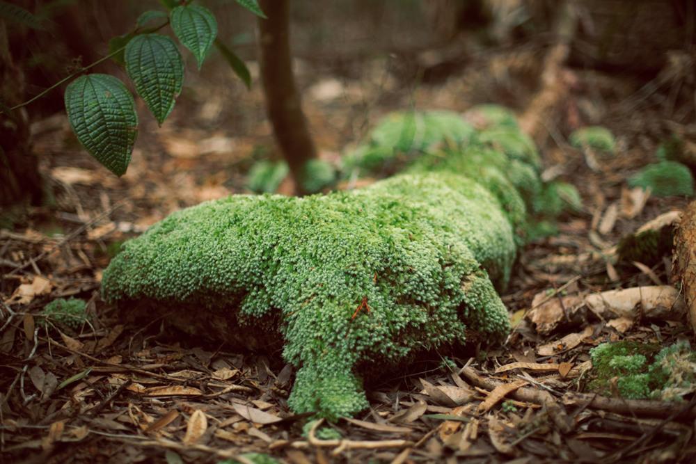 green-moss-texture.jpg