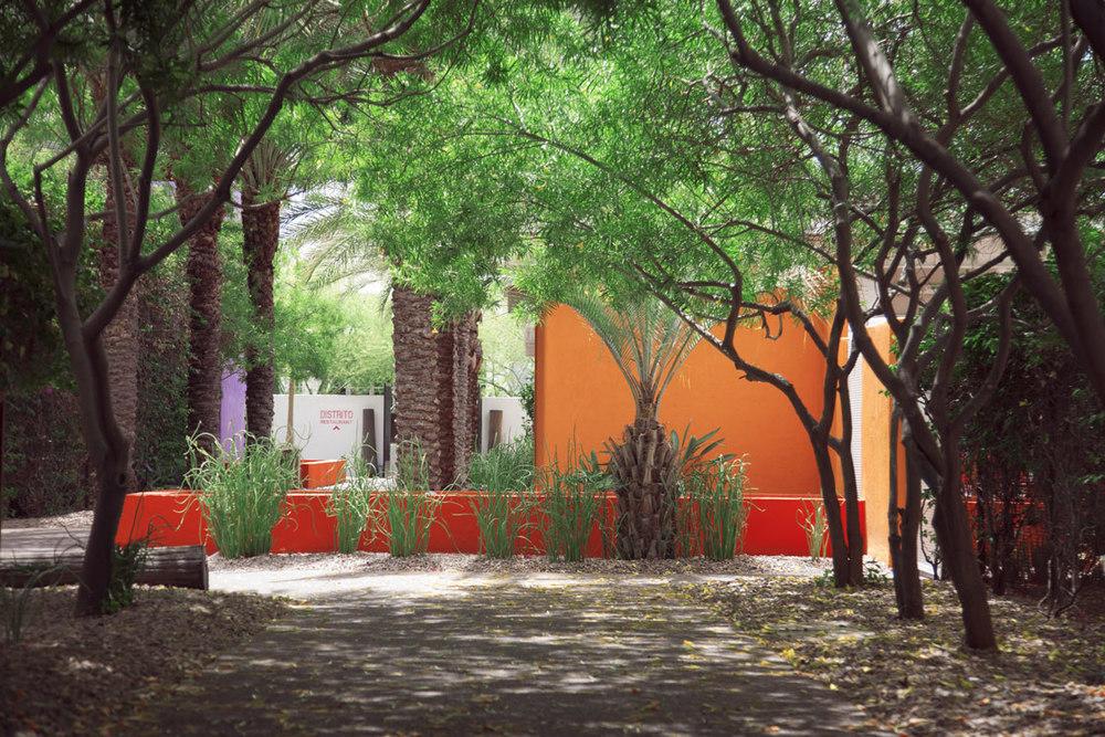 palm-trees-walkway.jpg