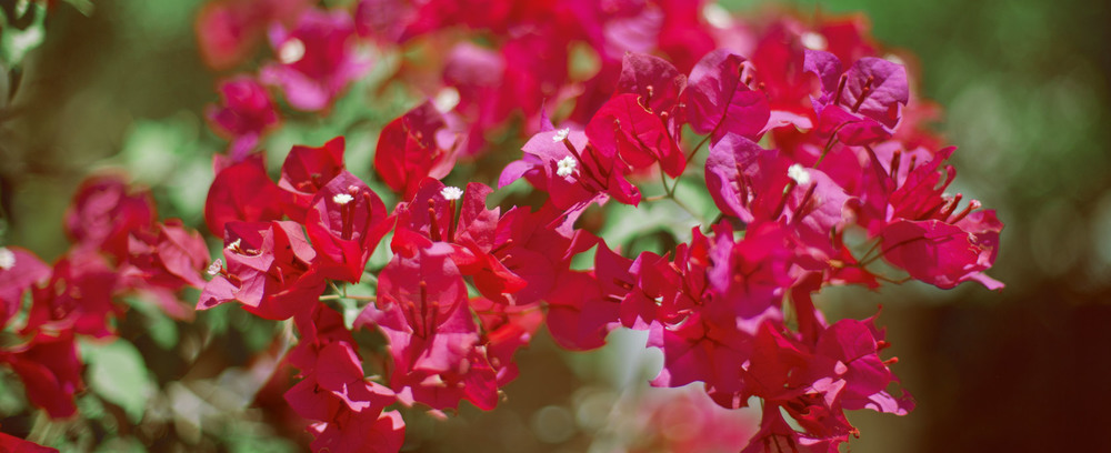 red-flowers-arizona.jpg