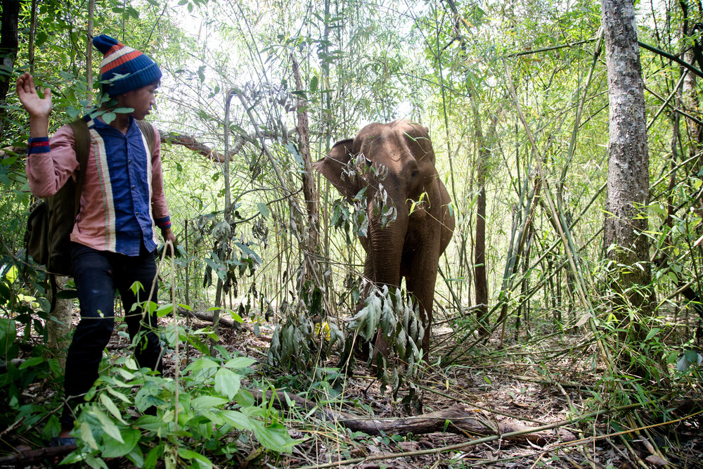 """The Mondulkiri Project"" -Protecting the land from logging. Renting the elephant from the aboriginal village. Let the elephant walk freely in the protected land. Train aborigines to take care of the elephant or became a guide for ""The Mondulkiri Project in Cambodia. By Ann Wang"