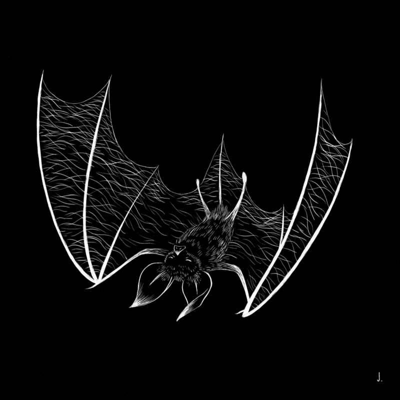 Harbinger (Bat)