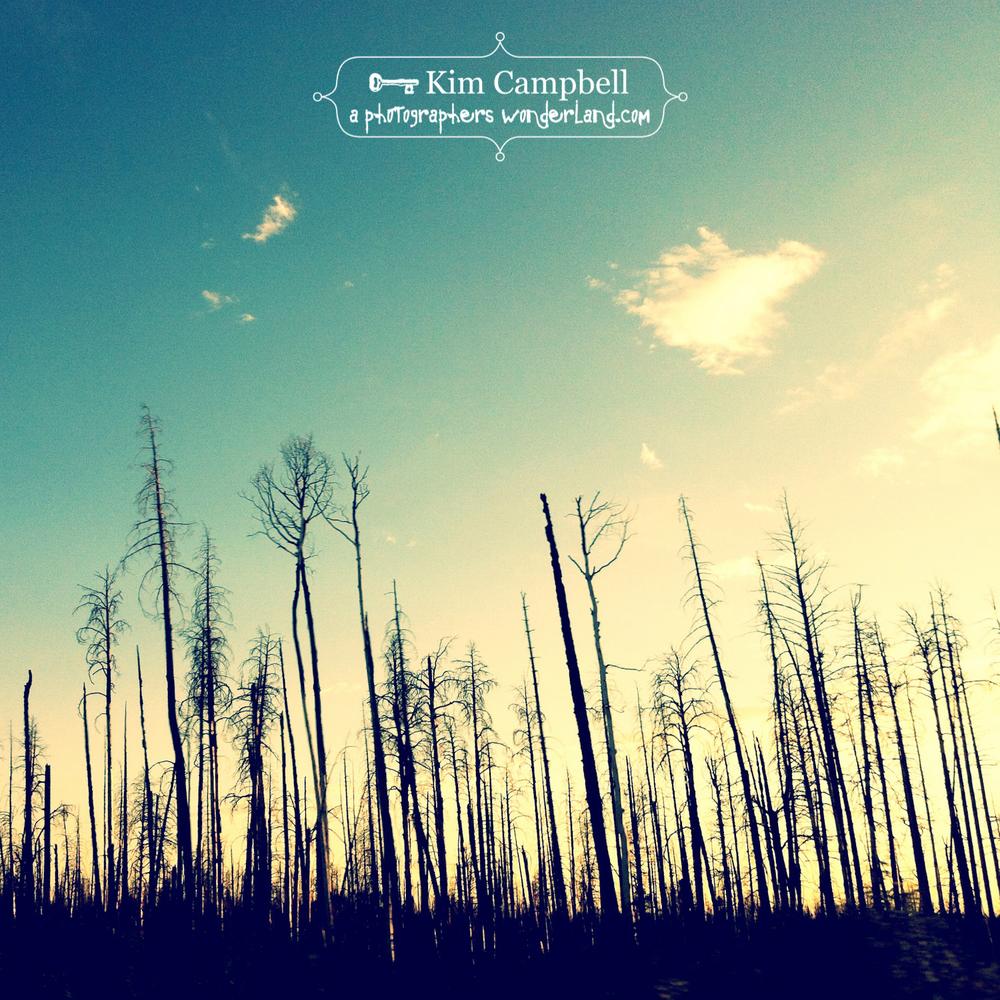 campbell_kim_IMG_0016.jpg