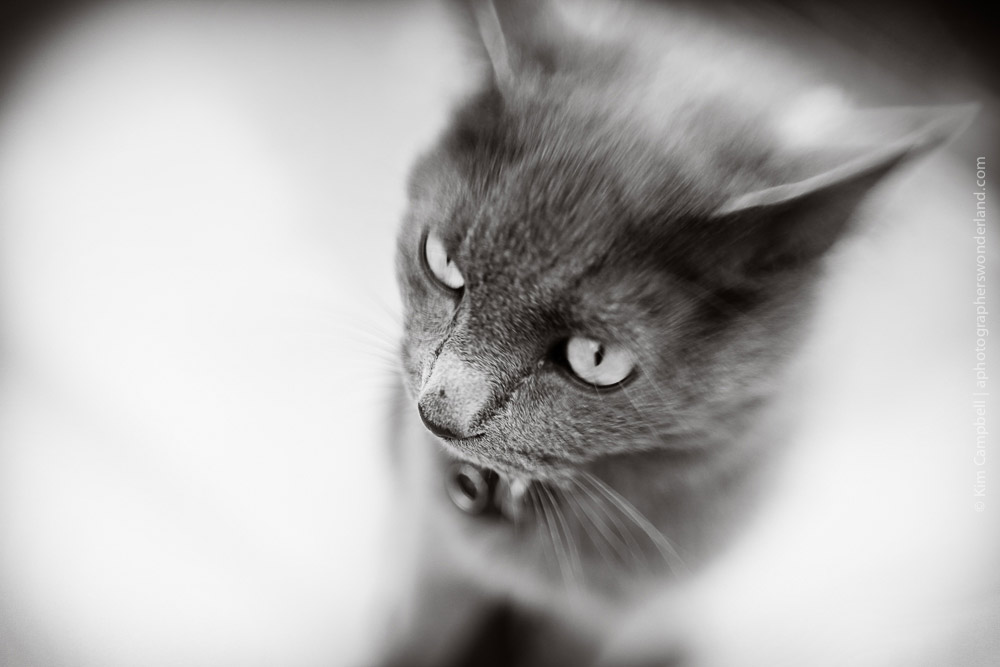 Animal - LENSBABY Sweet 35