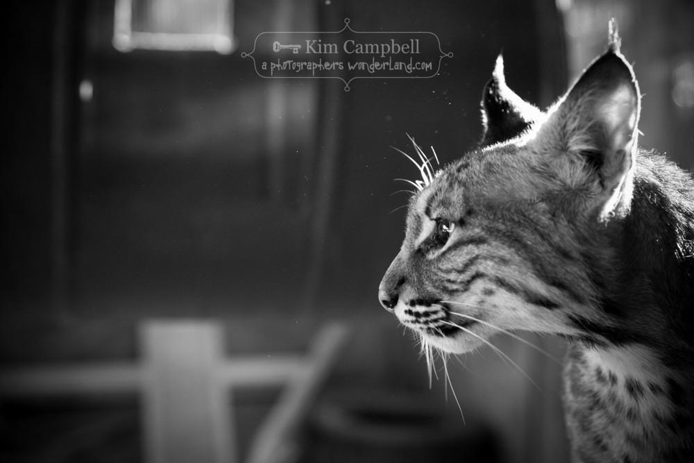 campbell-kim_0600.jpg