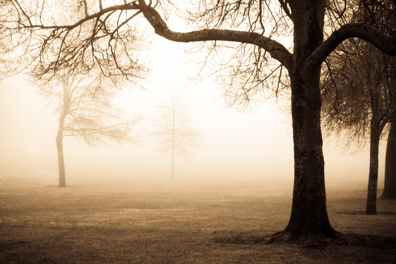 kim-campbell_photographer_lone-fog_-2.jpg