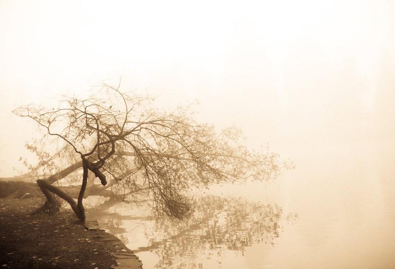 kim-campbell_photographer_lone-fog_-5.jpg