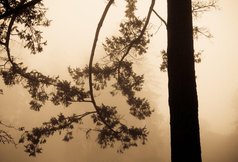 kim-campbell_photographer_lone-fog_-6.jpg