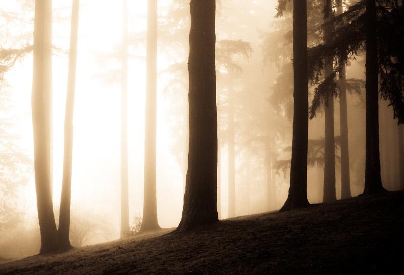 kim-campbell_photographer_lone-fog_.jpg