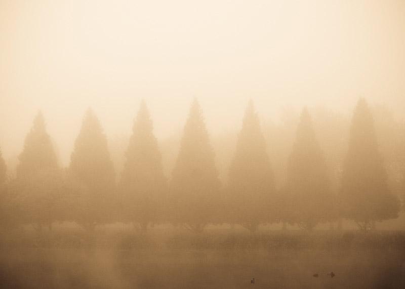 kim-campbell_photographer_lone-fog_2014.jpg
