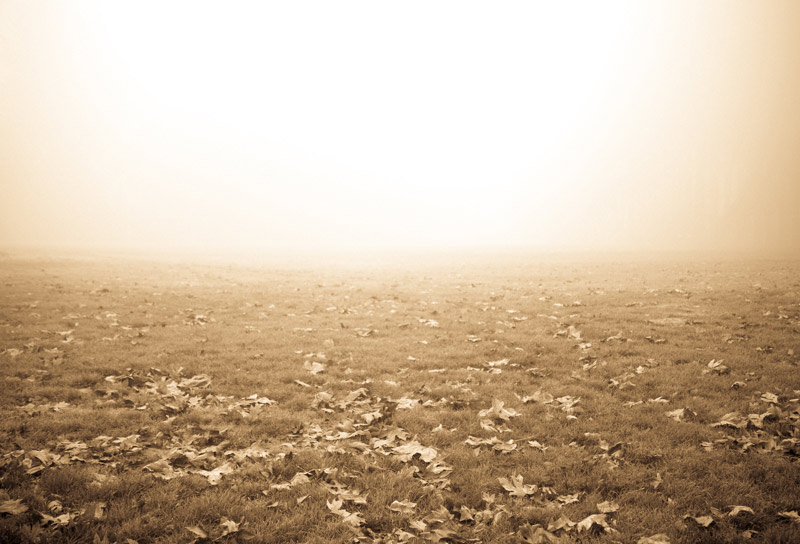 kim-campbell_photographer_lone-fog_9475.jpg