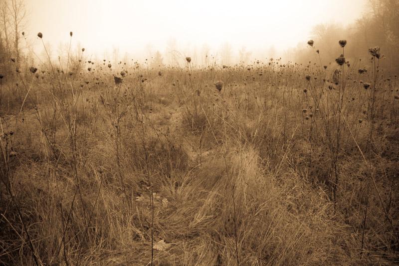 kim-campbell_photographer_lone-fog_9504.jpg