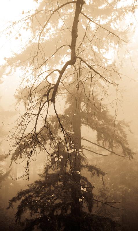 kim-campbell_photographer_lone-fog_-9.jpg