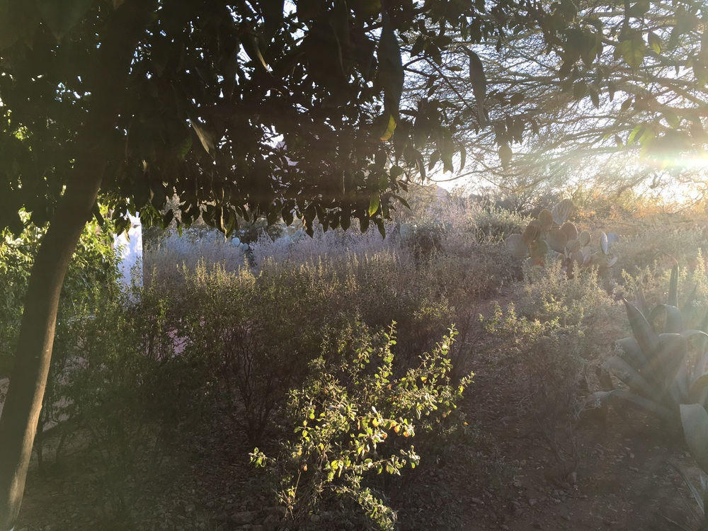 Desert light part 3. (El Chorro)
