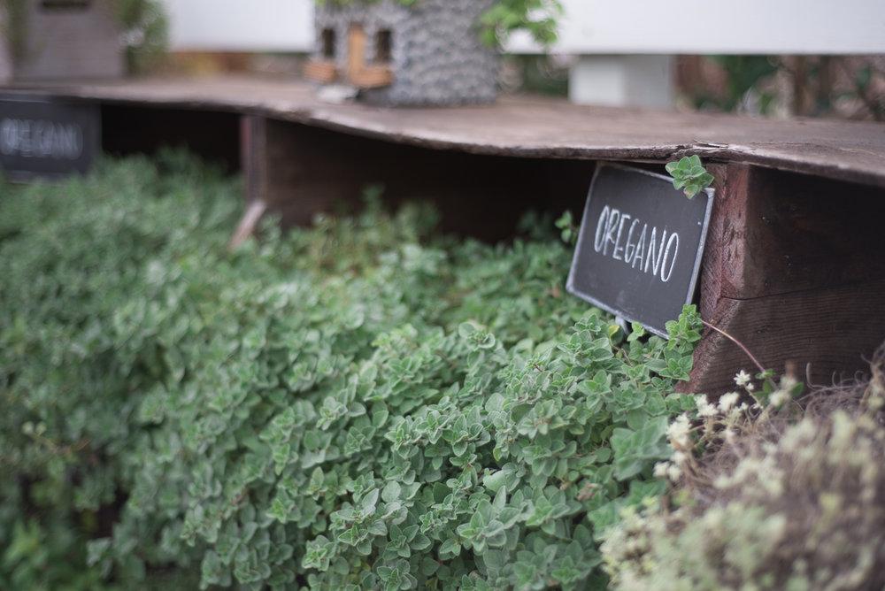 Magnolia Market Seed Supply Waco-28.jpg