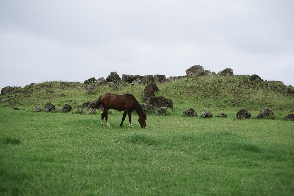 Pamela Yasuko - Oahu  Chicago Travel Photographer Rapa Nui Easter Island Chile-8.jpg