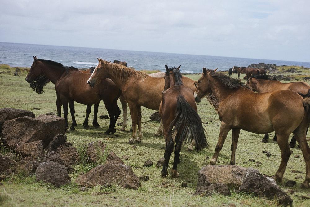 Pamela Yasuko - Oahu  Chicago Travel Photographer Rapa Nui Easter Island Chile-11.jpg