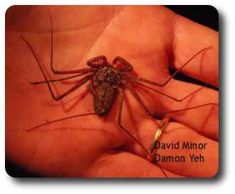 Crazy long legs enable the whip spider to find food and mates and avoid predators in the darkness.