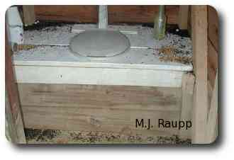 A night time trip to the outhouse can be especially exciting when army ants set up a bivouac inside.