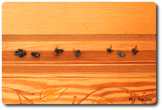 Flies on the windowsill signal the return of warmer days and spring.