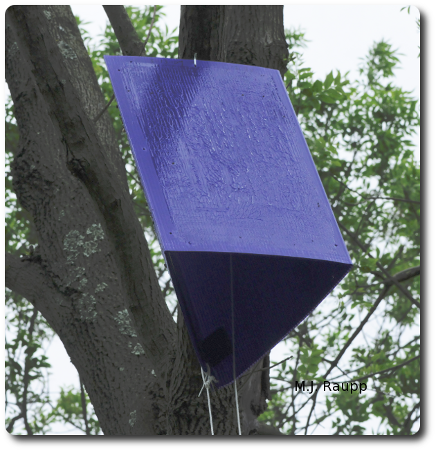 Purple Barney traps hung in trees throughout Maryland will help state officials and researchers learn where EAB is and how rapidly it is spreading.