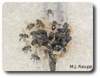 These bees mounted a powerful attack when curious humans ventured too near.