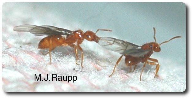 Bugs That Look Like Termites  Hunker