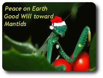 holiday-mantid-5.jpg