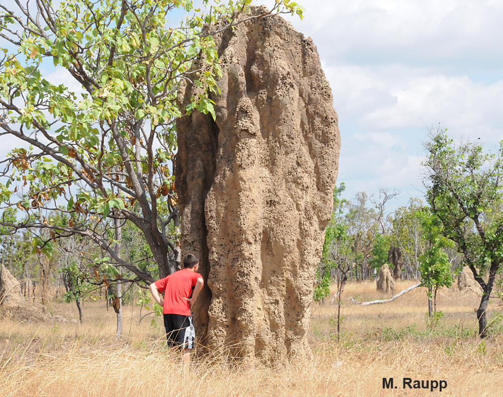Mounds of Cathedral termites dominate the landscape in the arid Northwest Territory.